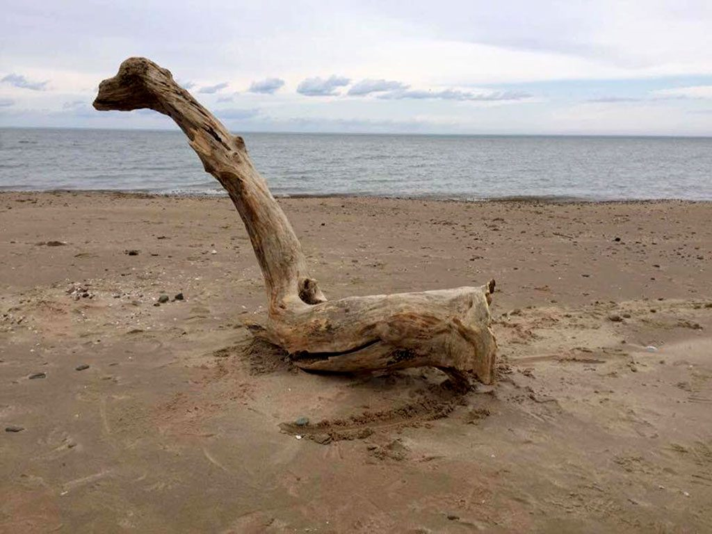 Puff the Magic Dragon driftwood by lake.