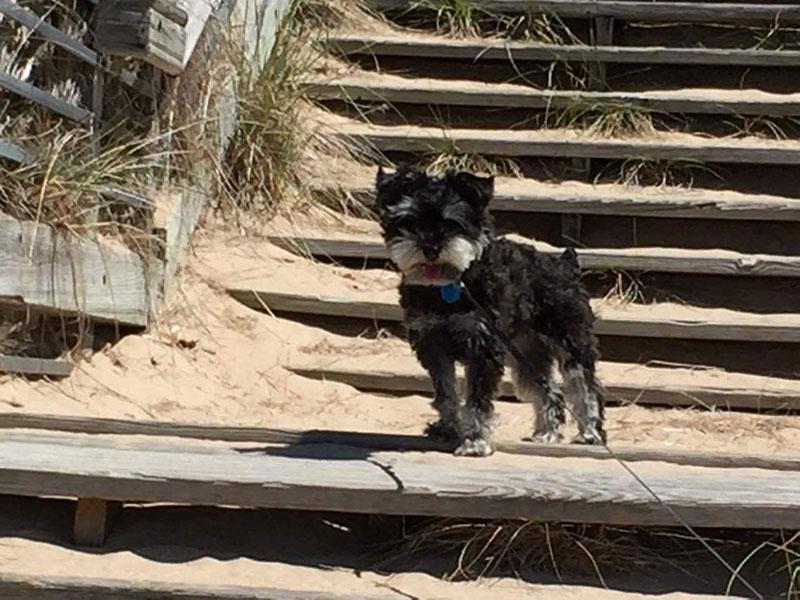 Izzy the dog on a Lake Michigan beach.