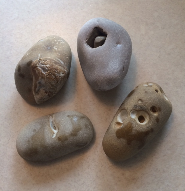 Rocks added to Peggy's rock collection.