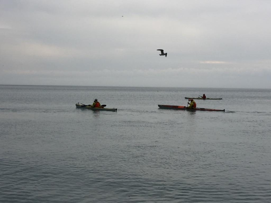 3 kayakers paddling by Klode Park with a seagull over head.