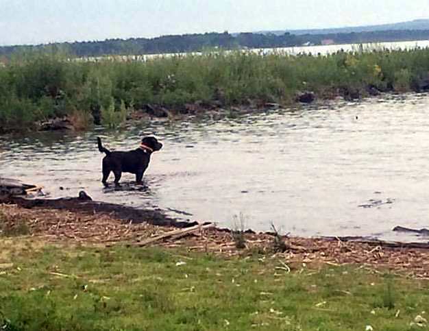 Henry a handsome black dog by the Raber Bay boat landing.